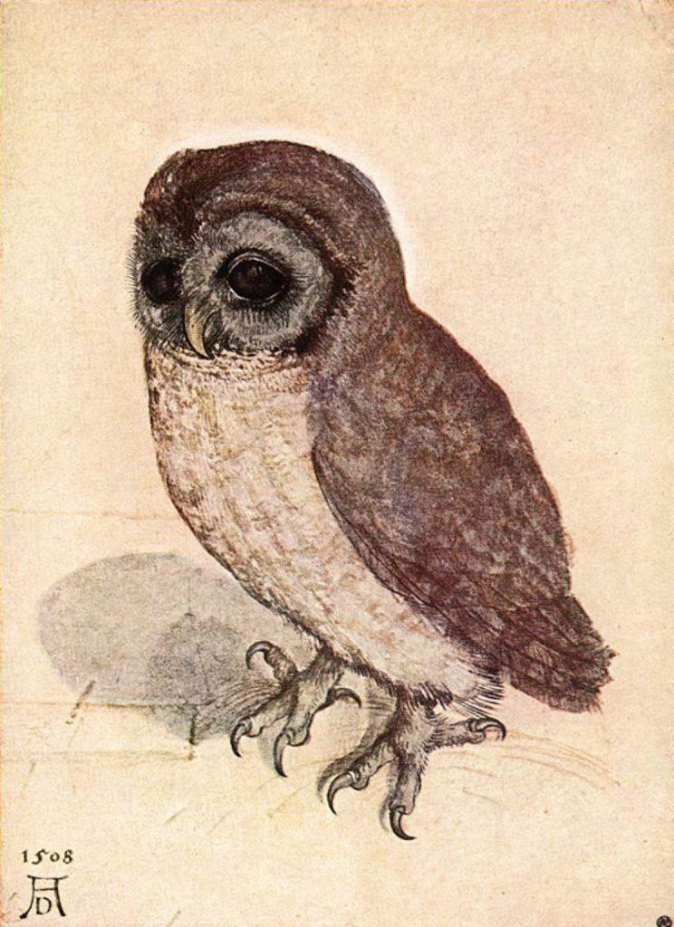 Albrecht Dürer - Kleine Eule
